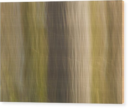 Poplar Wood Print