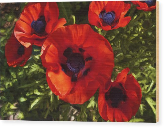 Poppies 1 Wood Print