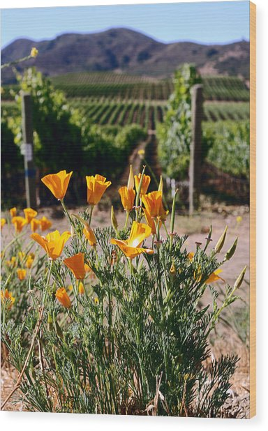 poppies and Vines Wood Print