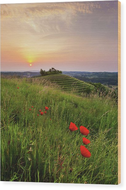 Wood Print featuring the photograph Poppies Burns by Davor Zerjav