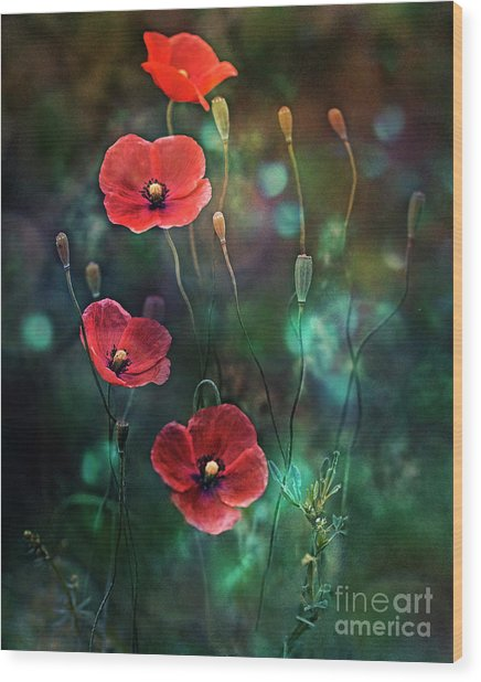 Poppies Fairytale Wood Print