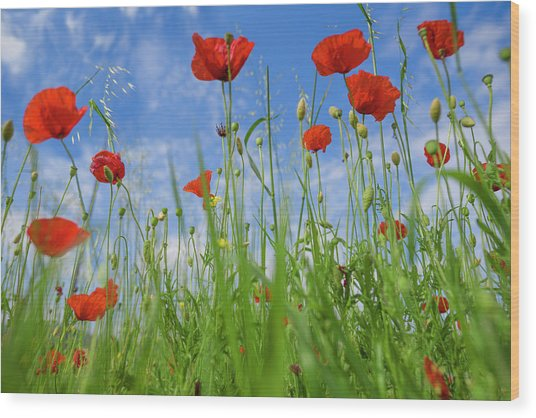 Poppies II Wood Print