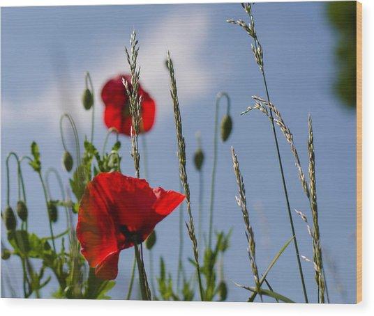 Poppies In The Skies Wood Print