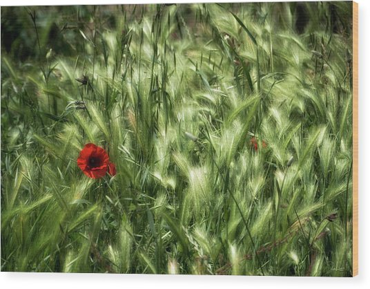 Poppies In Wheat Wood Print