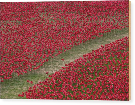 Poppies Of Remembrance Wood Print
