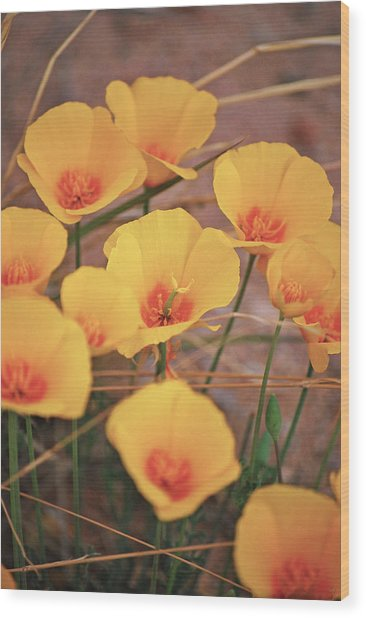 Poppies On Mount Lemmon Wood Print
