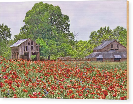 Poppies On The Farm Wood Print
