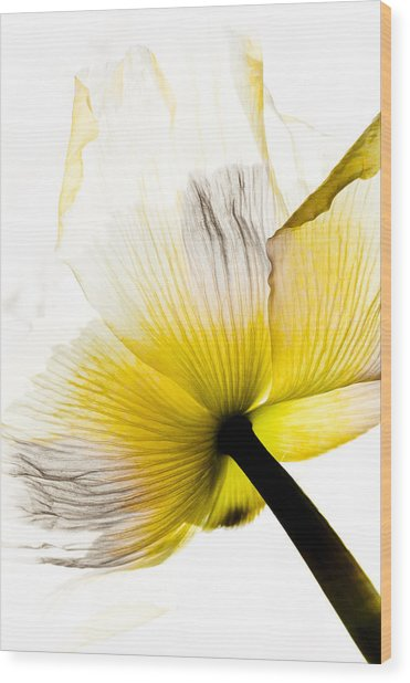 Poppy Flower Art Wood Print by Frank Tschakert