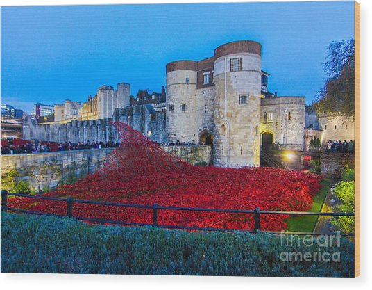 Poppy Flowers Tower Of London Wood Print