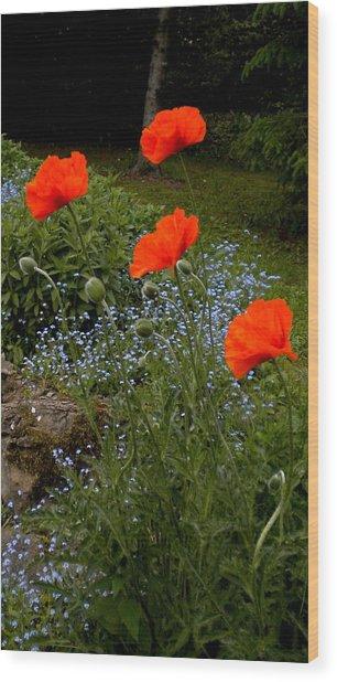 Poppy Foursome Wood Print