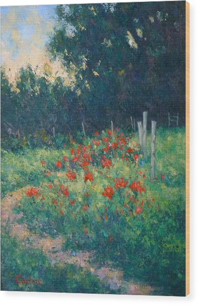 Poppy Garden Wood Print by Gene Cadore