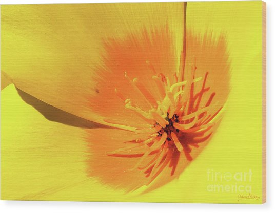 Poppy Impact Wood Print