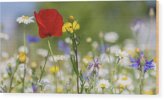 Poppy In Meadow  Wood Print