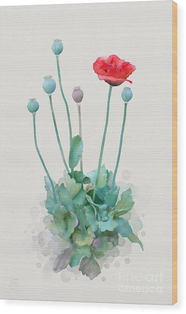 Wood Print featuring the painting Poppy by Ivana Westin
