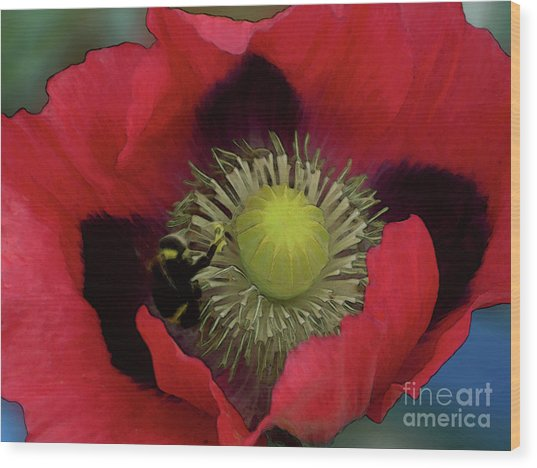 Poppy Love Wood Print