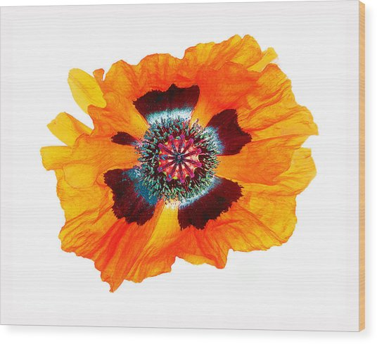 Poppy Pleasing Wood Print