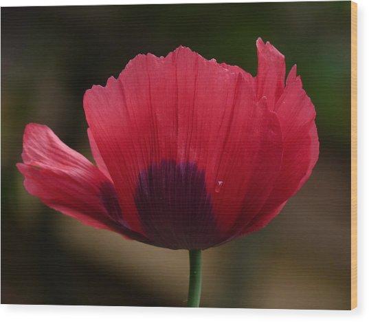 Poppy Wood Print by Shannon Gresham