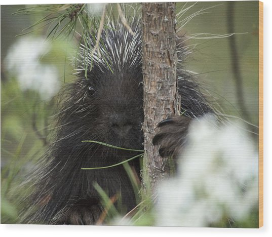 Porcupine Check-out Wood Print