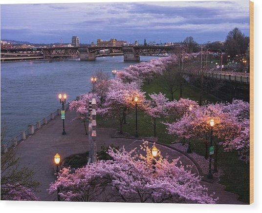 Portland Cherry Blossoms Wood Print