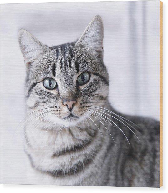 Portrait Gray Tabby Cat Photograph By Maika 777