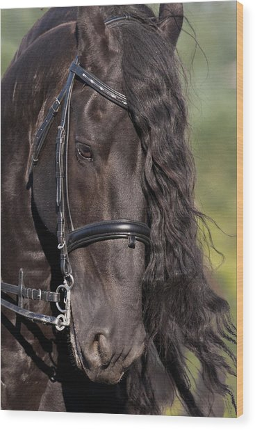 Portrait Of A Friesian Wood Print