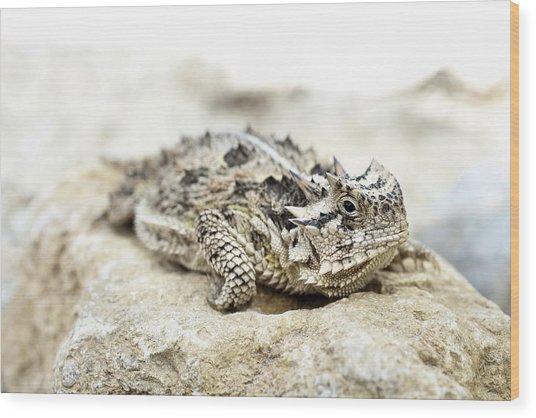 Portrait Of A Horned Lizard Wood Print by JC Findley