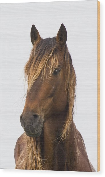 Portrait Of A Mustang Wood Print
