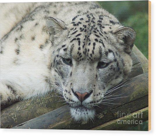 Portrait Of A Snow Leopard Wood Print