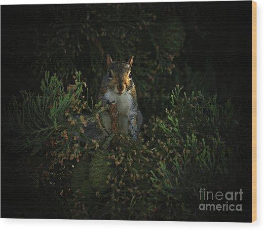 Portrait Of A Squirrel Wood Print