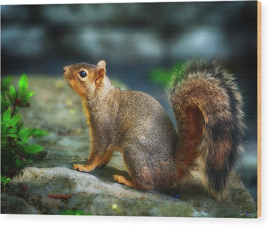 Portrait Of A Squirrell Wood Print