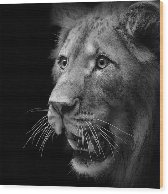 Portrait Of Lion In Black And White II Wood Print