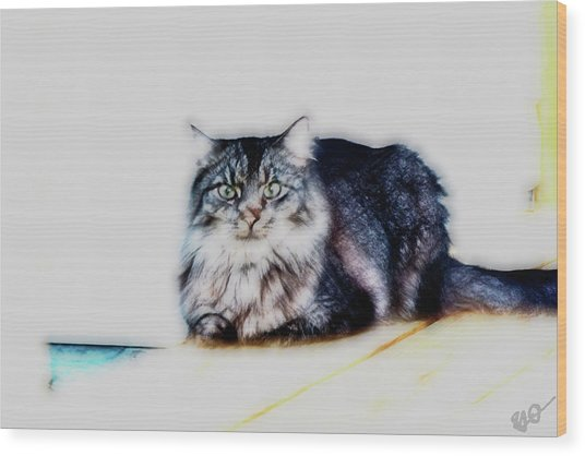 Portrait Of Maine Coon, Mattie Wood Print