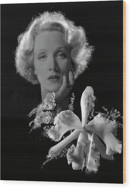 Portrait Of Marlene Dietrich Wood Print