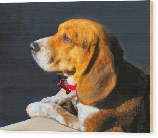 Portrait Of Pebbles - The Independent Beagle Wood Print