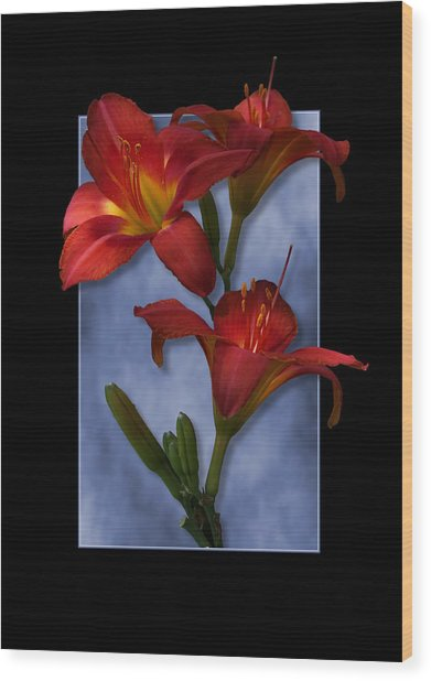 Portrait Of Red Lily Flowers Wood Print