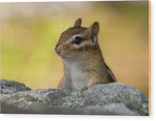 Posing Chipmunk Wood Print