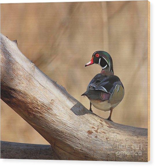 Posing Wood Duck Wood Print