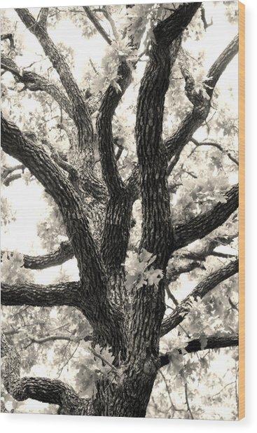 Post Oak Wood Print by Jeannie Burleson