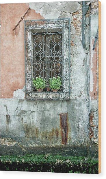 Pot Plant Window Wood Print