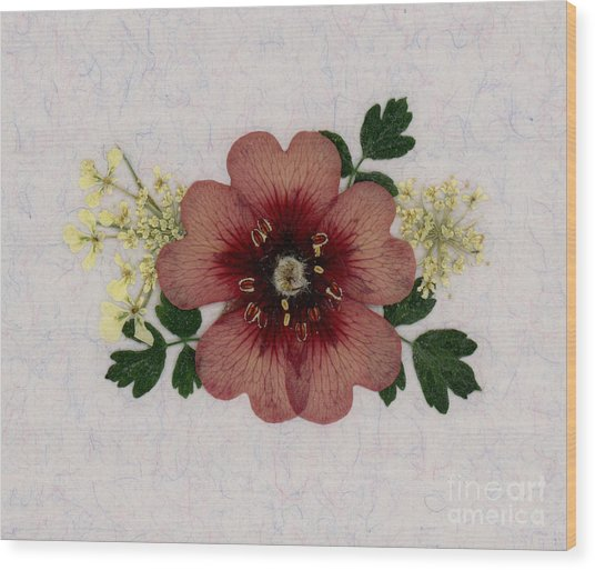 Potentilla And Queen-ann's-lace Pressed Flower Arrangement Wood Print