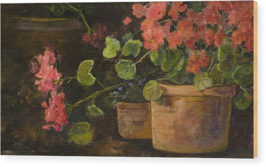 Pots Of Geraniums Wood Print by Jimmie Trotter