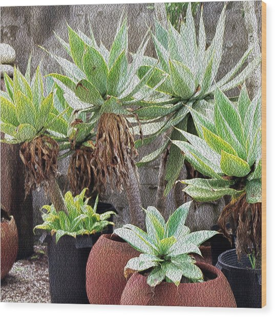 Potted Agave Plants Wood Print