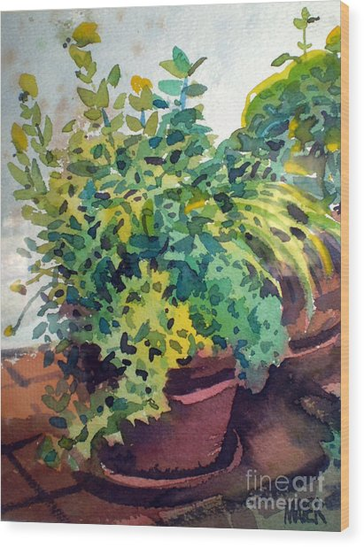 Potted Herbs Wood Print by Donald Maier