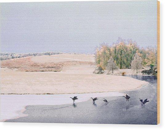 Powell Gardens In Winter Wood Print