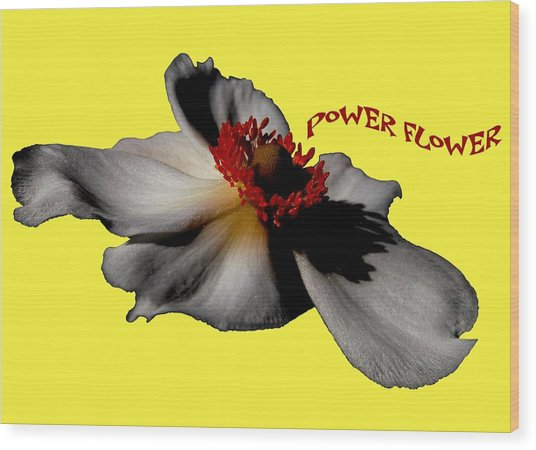 Power Flower Anemone Wood Print