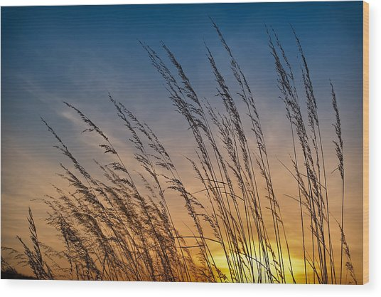 Prairie Grass Sunset Wood Print