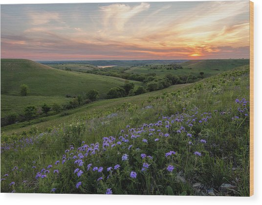 Prairie In Bloom Wood Print