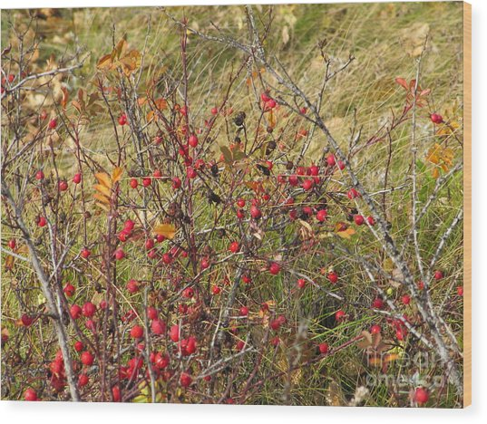 Prairie Rosehips Wood Print