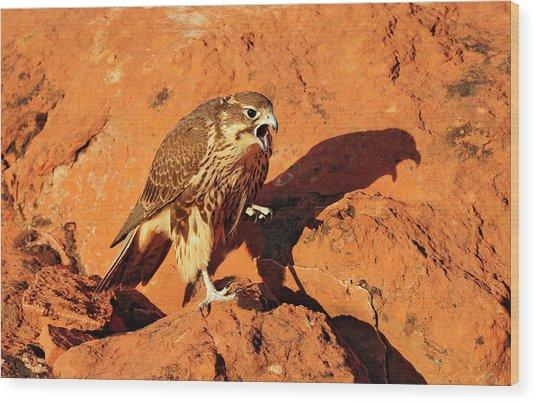 Prarie Falcon Wood Print by Dennis Hammer