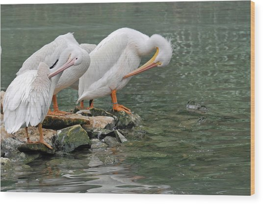 Prayer Of The Pelicans Wood Print by Teresa Blanton